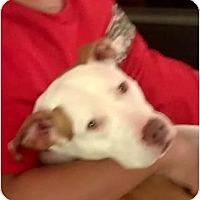 Adopt A Pet :: April - Love & Cuddles! - Sacramento, CA