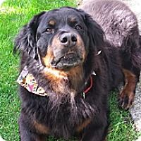 Adopt A Pet :: Nelly - Surrey, BC