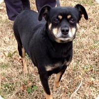 Adopt A Pet :: GINGER - Leland, MS