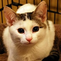 Adopt A Pet :: Cracker Jack - Auburn, CA