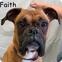 Adopt A Pet :: Faith - Warren, PA