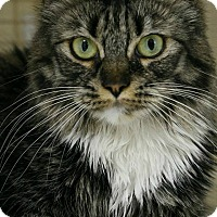 Adopt A Pet :: Miss Kitty - Encino, CA
