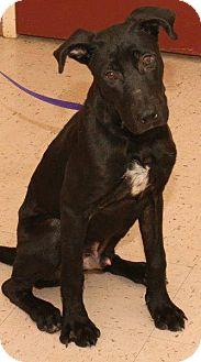 Labrador Retriever Mix Dog for adoption in McDonough, Georgia - Pickle