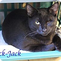 Adopt A Pet :: Jack-Jack - Bradenton, FL