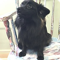 Adopt A Pet :: Buster ~ ADOPTED! - Saratoga Springs, NY