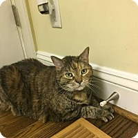 Adopt A Pet :: Leila (COURTESY POST) - Baltimore, MD