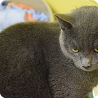 Adopt A Pet :: Troy - Pottsville, PA