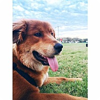 Adopt A Pet :: Frankie - Bryan, TX