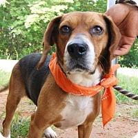 Adopt A Pet :: Nutmeg - Winder, GA
