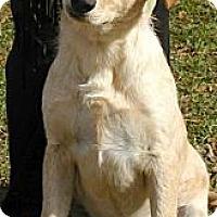 Labrador Retriever/Australian Shepherd Mix Dog for adoption in Greenville, Alabama - Dogs & Puppies