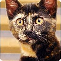 Adopt A Pet :: Chocolate - Encinitas, CA