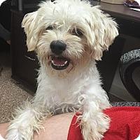 Adopt A Pet :: Oscar (Needs Foster Homes) - Las Vegas, NV