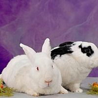 Adopt A Pet :: Mallory - Marietta, GA