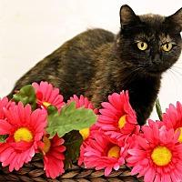 Adopt A Pet :: ATESSA! - Owenboro, KY