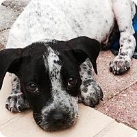 Adopt A Pet :: Louie - Miami, FL
