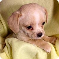 Adopt A Pet :: ! 4 Charlie - Colton, CA