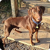 Adopt A Pet :: Rocco - New Richmond, OH