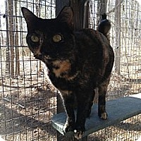 Adopt A Pet :: Miss. Meowsey - Monroe, GA