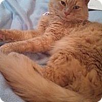 Adopt A Pet :: Wolfie - Arlington, VA