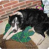 Adopt A Pet :: Charly - Swiftwater, PA