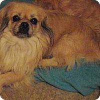 Adopt A Pet :: Jessie James (in Maine) - Vansant, VA
