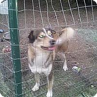 Adopt A Pet :: Deuce - Puyallup, WA