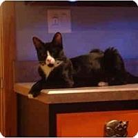Adopt A Pet :: Frankie - Muncie, IN