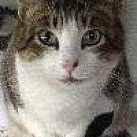 Adopt A Pet :: Daisy - Newtown, PA