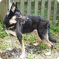 Adopt A Pet :: Beau - Inverness, FL