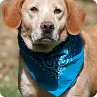 Adopt A Pet :: Lola - Lewisville, IN