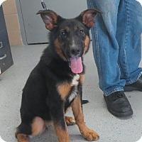 Adopt A Pet :: Hilda - Greenville, RI