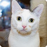 Adopt A Pet :: Priscila - Irvine, CA