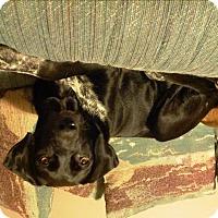 Adopt A Pet :: Chelsey - Richmond, VA