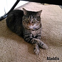 Adopt A Pet :: Aladdin - Fullerton, CA