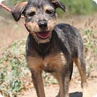 Adopt A Pet :: Brianna - Fillmore, CA