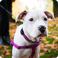 Adopt A Pet :: Edith - Pitt Meadows, BC