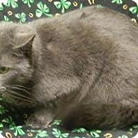Adopt A Pet :: Nellie - Columbus, NE
