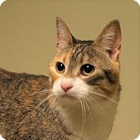 Adopt A Pet :: Cotton - Hastings, NE