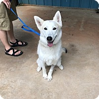Adopt A Pet :: Candy - Roswell, GA