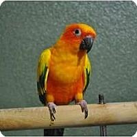 Adopt A Pet :: Sally - Redlands, CA