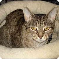 Adopt A Pet :: Wendy - Chesapeake, VA