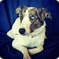 Adopt A Pet :: Kylee - Cheyenne, WY