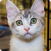 Adopt A Pet :: Gabby - Irvine, CA