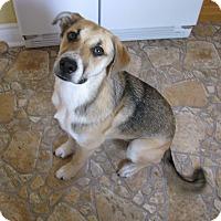 Adopt A Pet :: Bruno - Caledon, ON