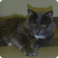 Adopt A Pet :: Missy - Hamburg, NY