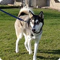 Adopt A Pet :: LULU - Winnipeg, MB