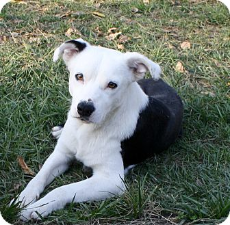 Border Collie Mix Dog for adoption in Sacramento, California - Runner!