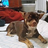 Adopt A Pet :: Anastasia - Oakley, CA