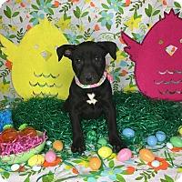 Adopt A Pet :: Jamie - Orange County, CA