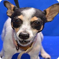 Adopt A Pet :: REMI - Pearland, TX
